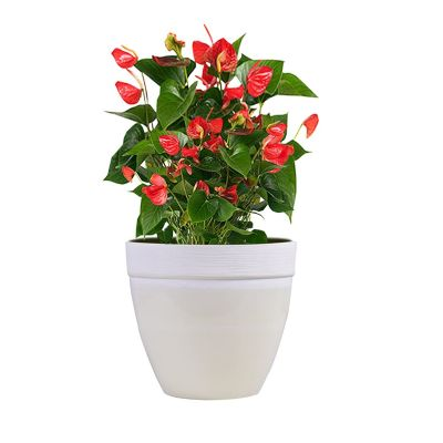 Sharpex Textured Style Flower Pot (Small, Ivory)