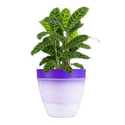 Textured Pot  - Violet - Large( POT-TE-T30-303 )