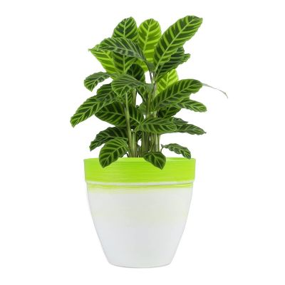 Sharpex Plastic 30 Series Textured Style Smart Dual Color Flower Pot (lime green, Large)