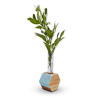Hexagon Test Tube Wooden Plant Stand (ID-BR-007)